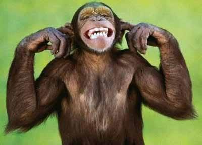 _sp-majmunu-je-dosadno