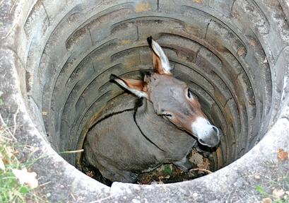 Around Minn Donkey rescue